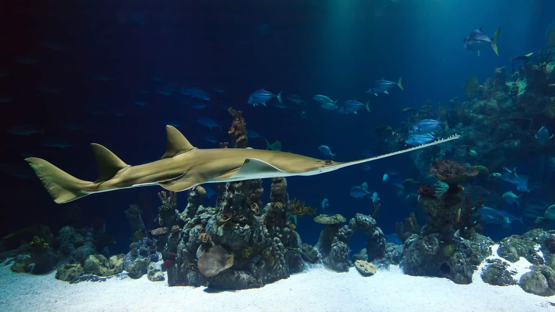 Unterwasserfotografie – die 4 besten Tipps für schöne Fotos