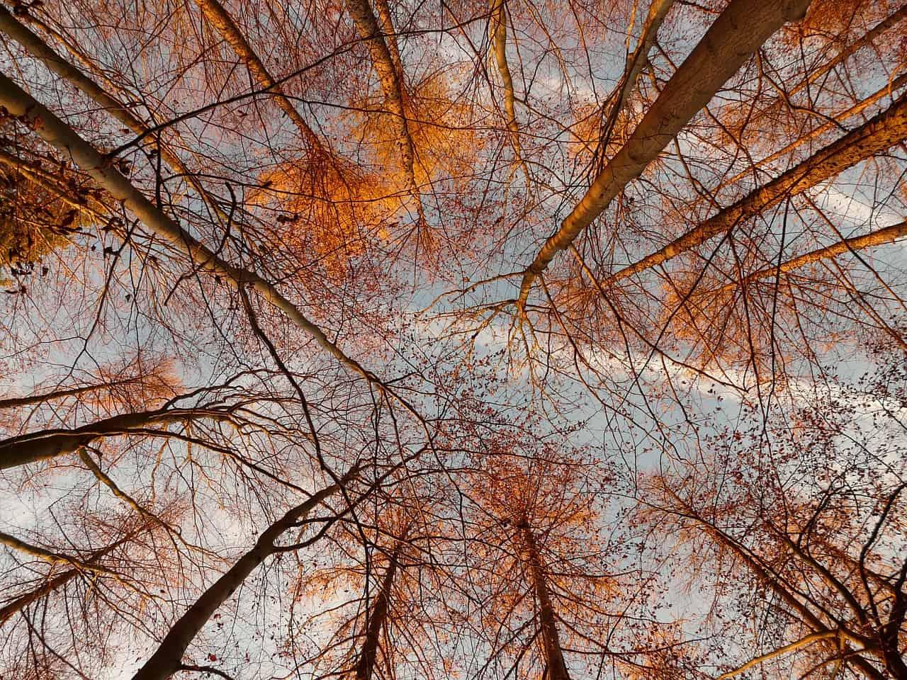 Bäume 360 Grad
