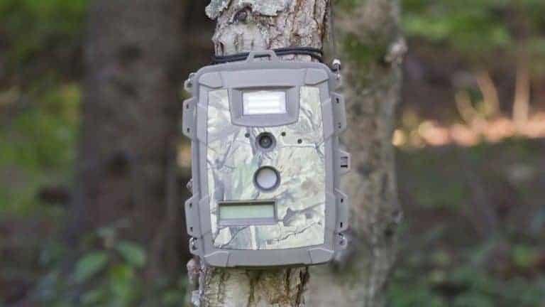 Wildkamera Baum