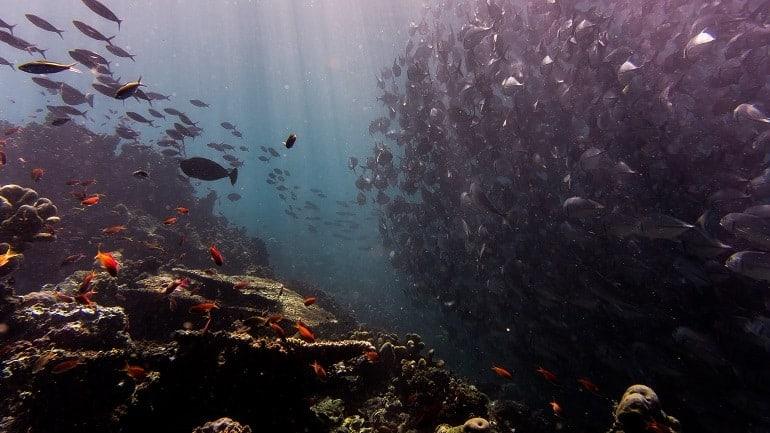 Unterwasserkamera Fischschwarm