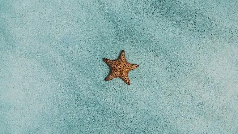 Unterwasserkamera Seestern